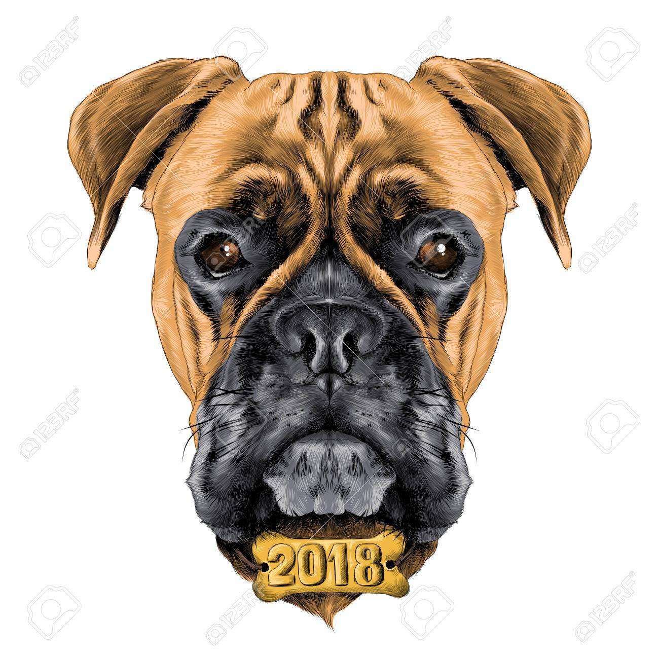 1300x1300 The Head Of The Dog Breed Boxer Dog Collar C A Vector Sketch