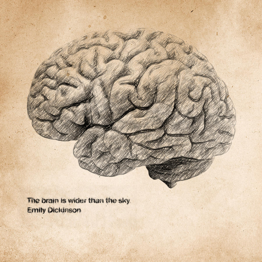 Brain Anatomy Drawing at GetDrawings.com | Free for personal use ...