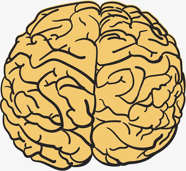 650x595 Cartoon Hand Drawing Brain, Human Brain, Mind, The Brain Png