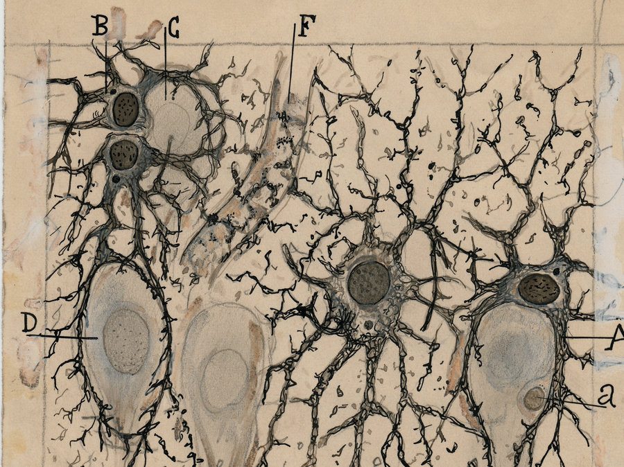 900x674 A New Book And Exhibit On Santiago Ramon Y Cajal Highlight