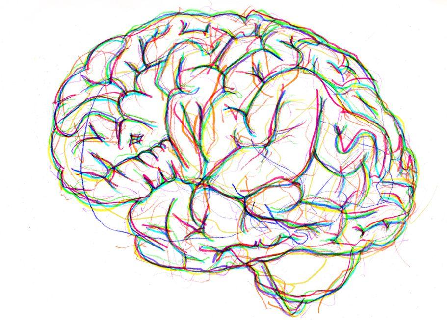 911x653 Gallery Drawings Of Brain,