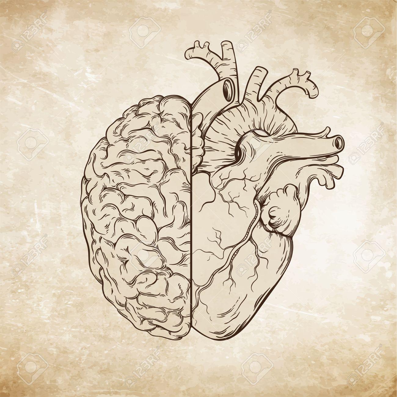 1300x1300 Hand Drawn Line Art Human Brain And Heart. Da Vinci Sketches