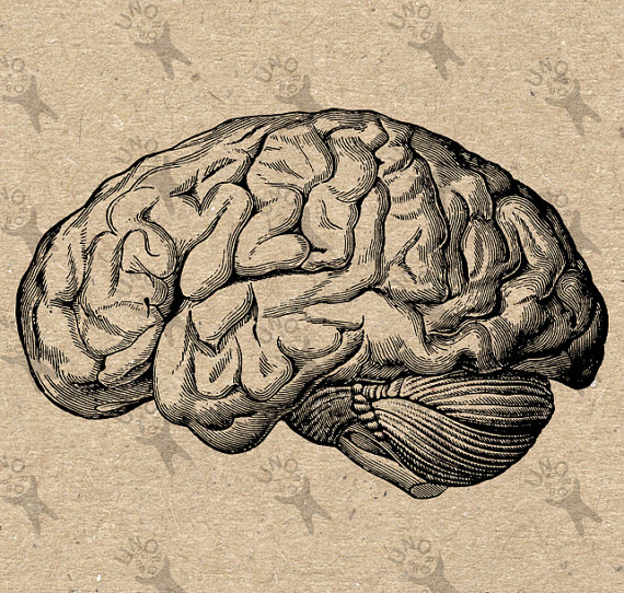 570x542 Vintage Anatomical Brain Clip Art Design Transfer Digital File