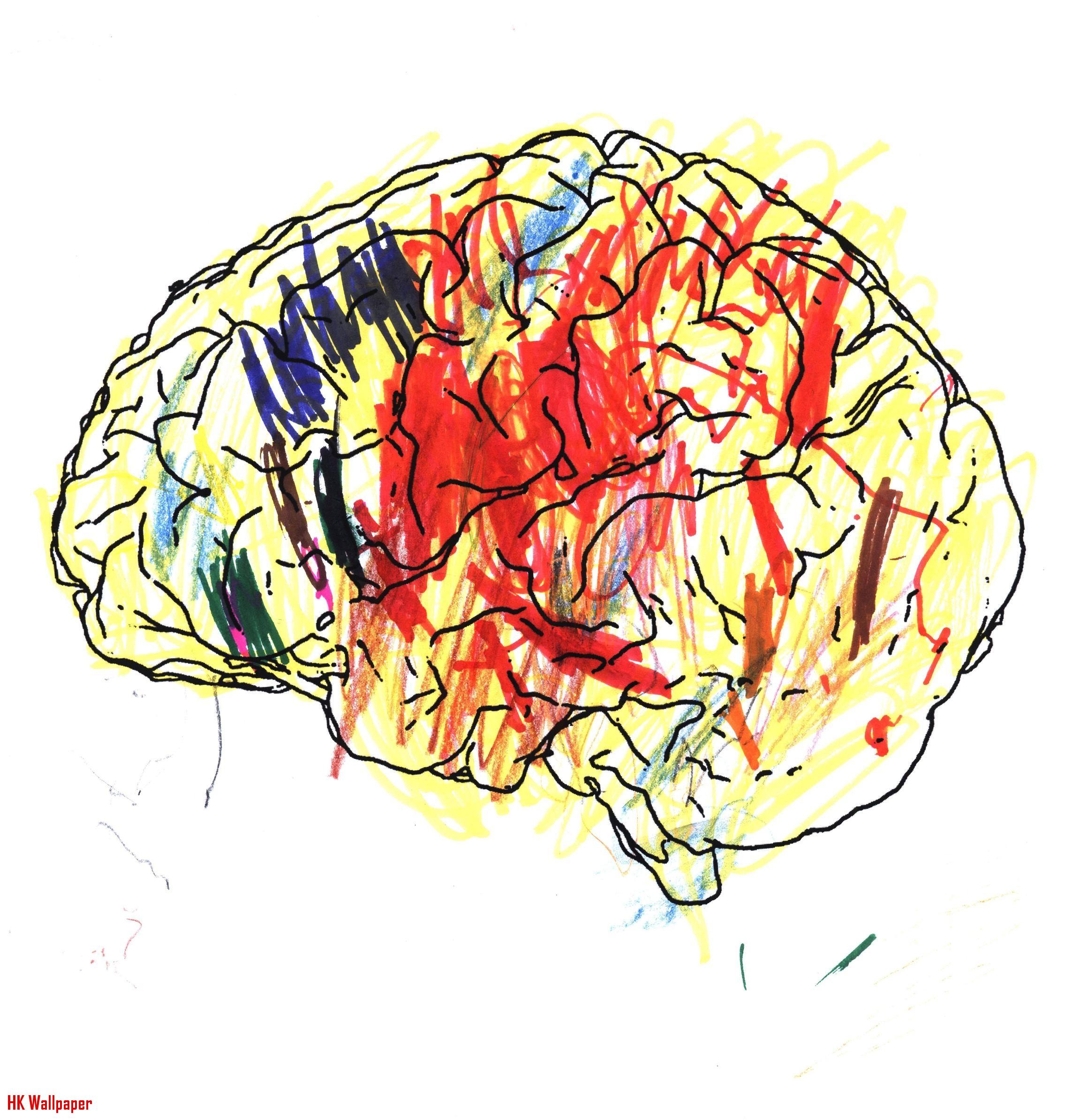 Brain Drawing Images at GetDrawings   Free download