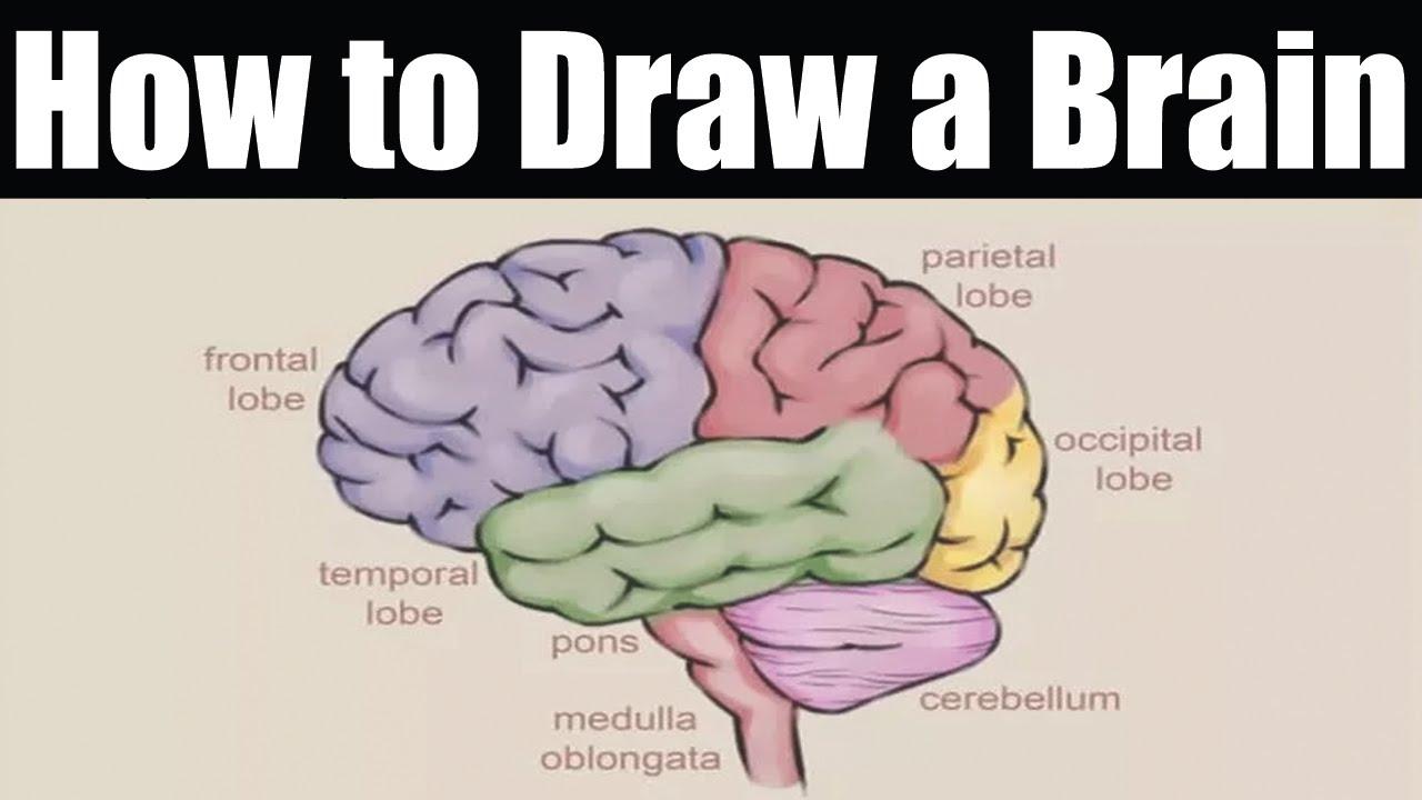 Brain Drawing Simple at GetDrawings | Free download