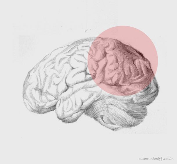 610x566 Anatomy, Art, Black And White, Brain, Cerebral Cortex