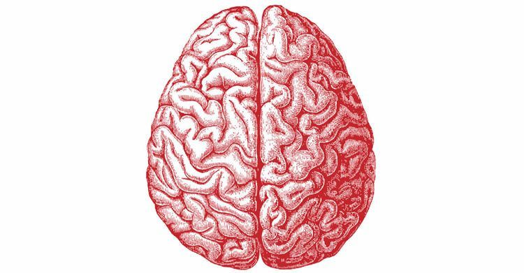 750x391 Brain Drawing Tumblr