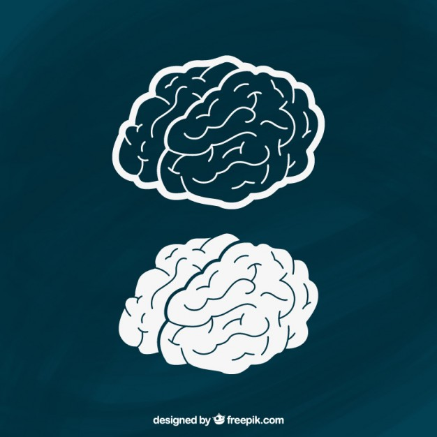 626x626 Hand Drawn Brains Vector Free Download