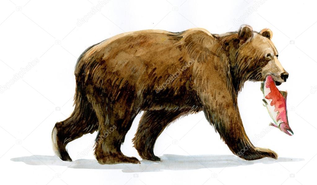 1023x597 Grizzly Brown Bear With Fish Stock Photo Sushkonastya