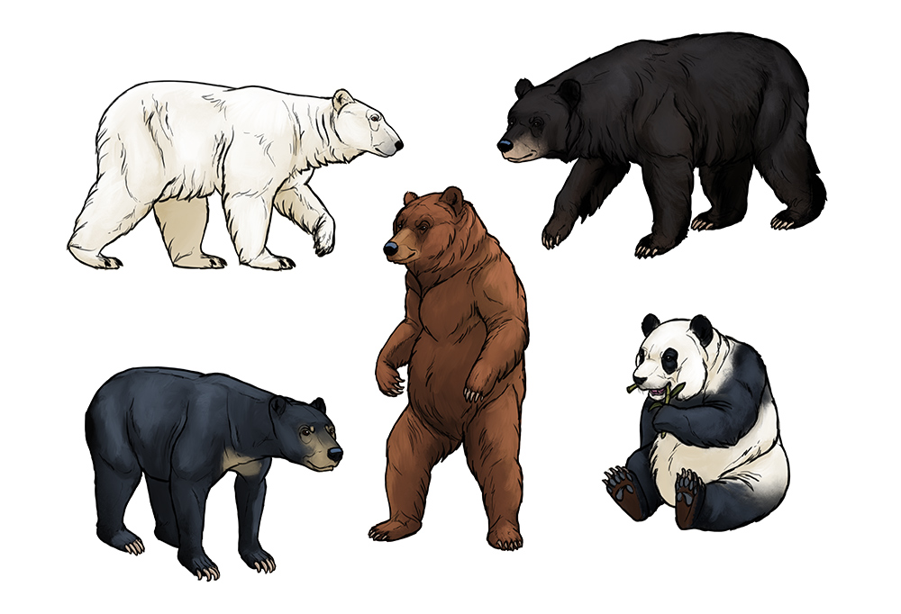 1000x682 How To Draw Bears Big, Fluffy Amp Clumsy