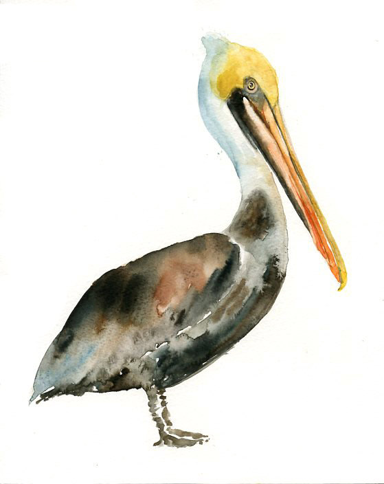 559x704 Brown Pelican Original Watercolor Painting 8x10inch(Vertical