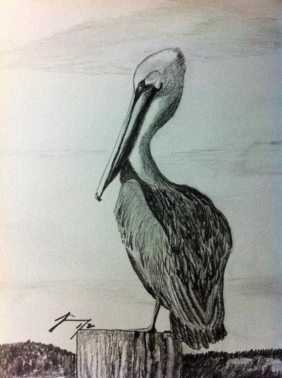 570x763 Coastal Pelican Framed Original Pencil Drawing Coastal