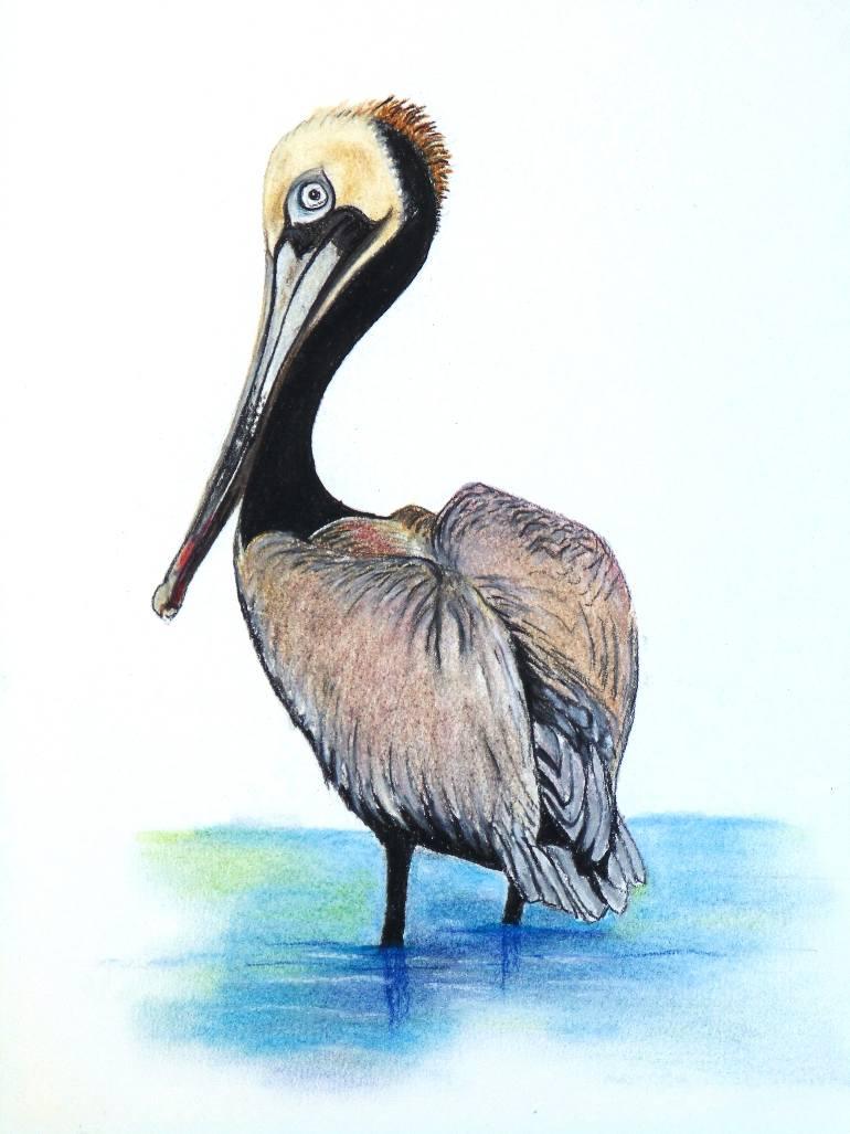 770x1027 Saatchi Art Brown Pelican Drawing By Karin Best