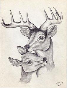 227x300 Buck Drawings