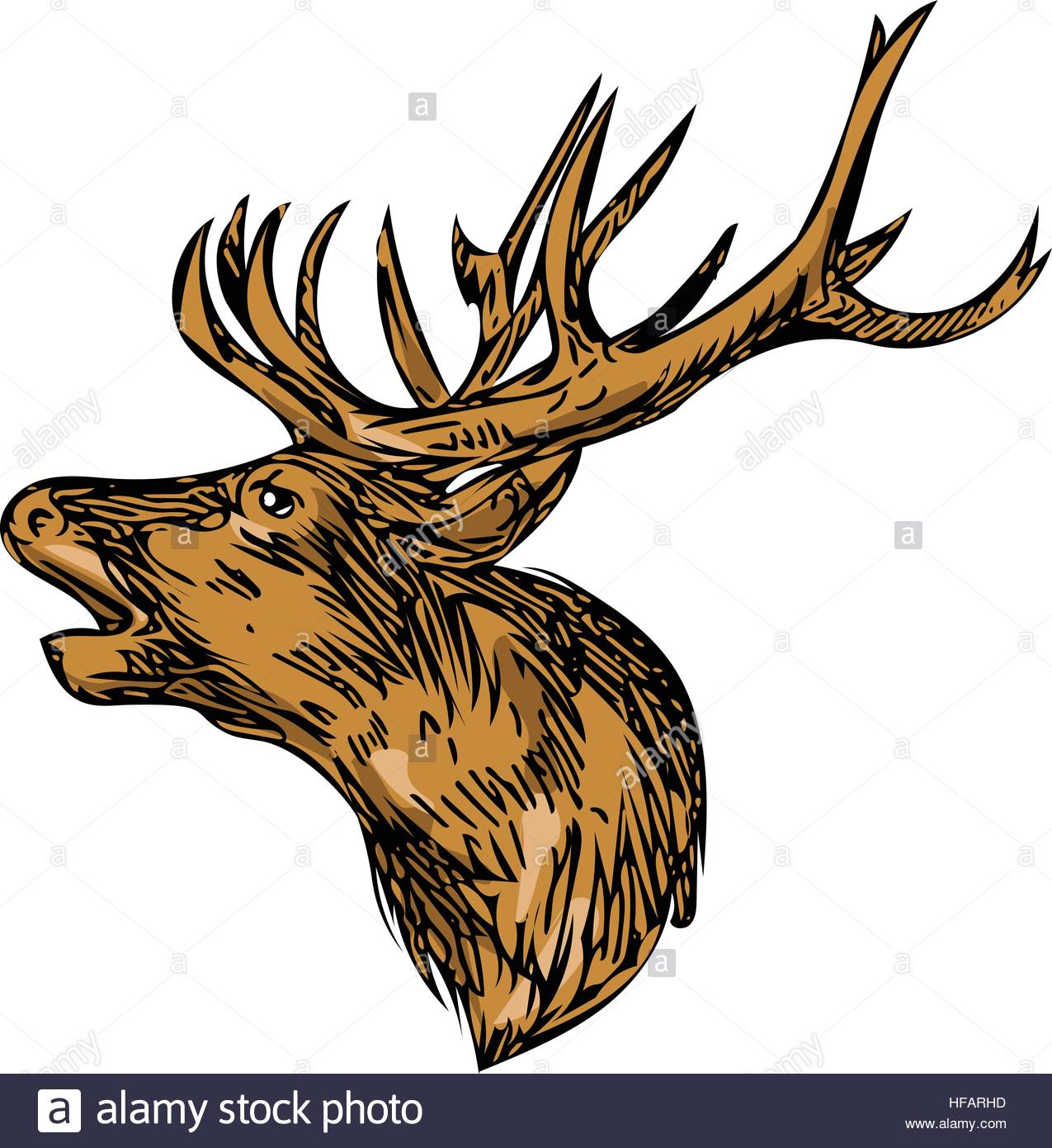 1275x1390 Drawing Sketch Style Illustration Of A Red Deer Stag Buck Head