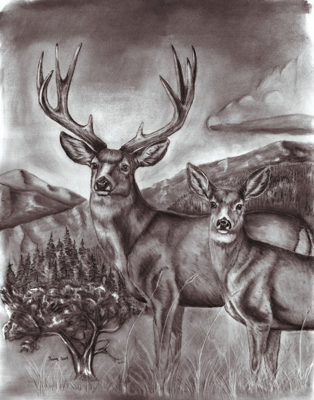 1100x1400 Mule Deer Also Move Differently Than White Tailed Deer When