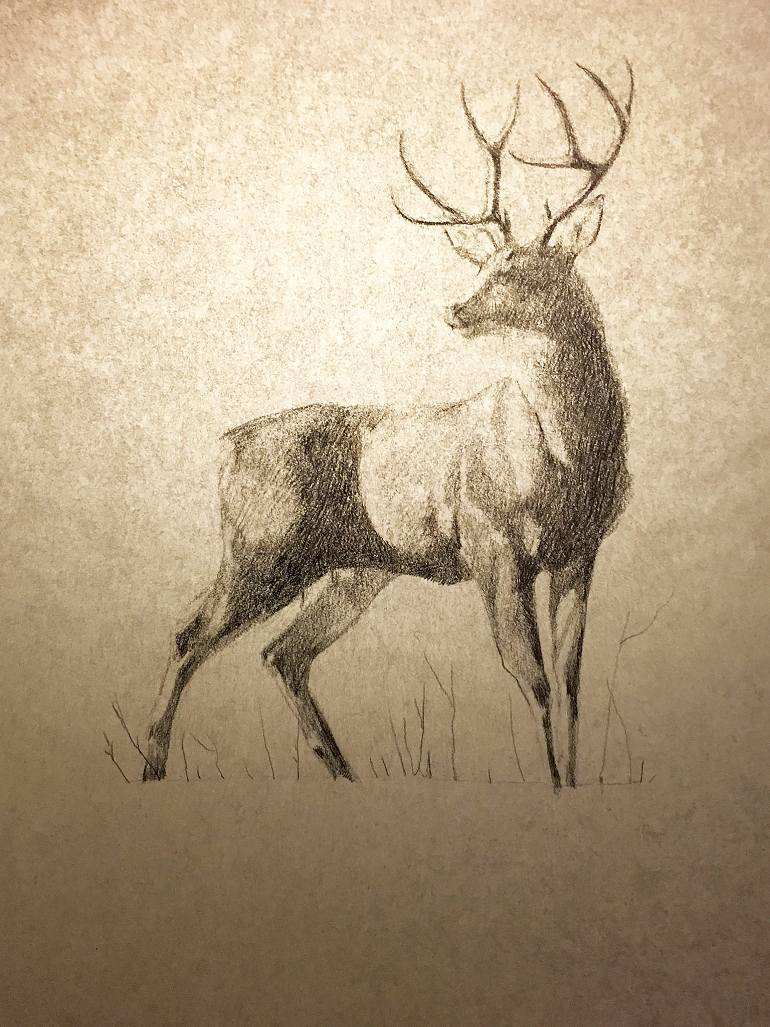 770x1027 Saatchi Art Winter Buck Drawing By Jessica Klier