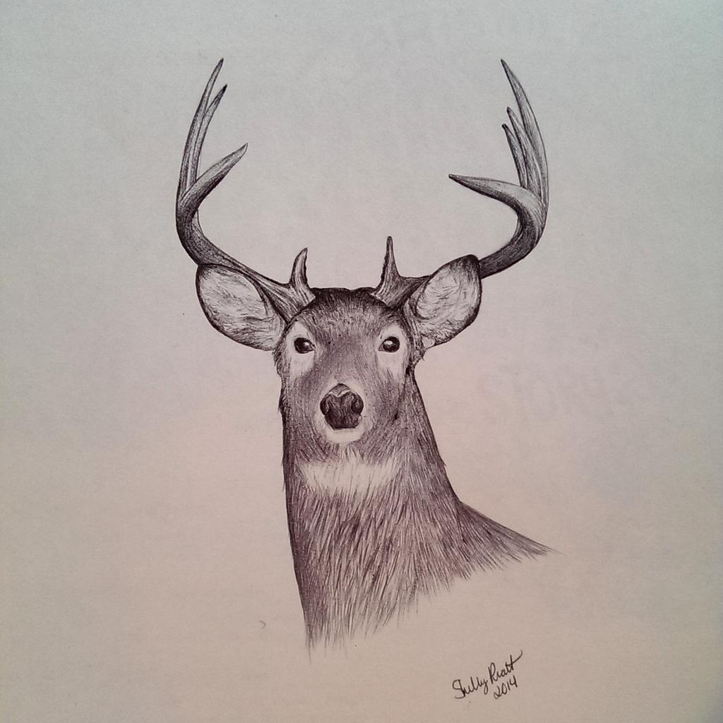 1024x1024 Shelby Pratt On Twitter Buck, Drawn With Ballpoint Pen.