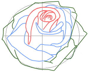 300x244 How To Draw A Rose Bud