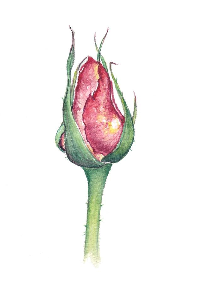 633x900 Rose Bud Painting By Heidi Kriel