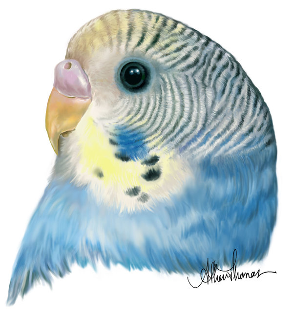 600x657 Budgies Are Awesome Digital Drawing Of A Budgie
