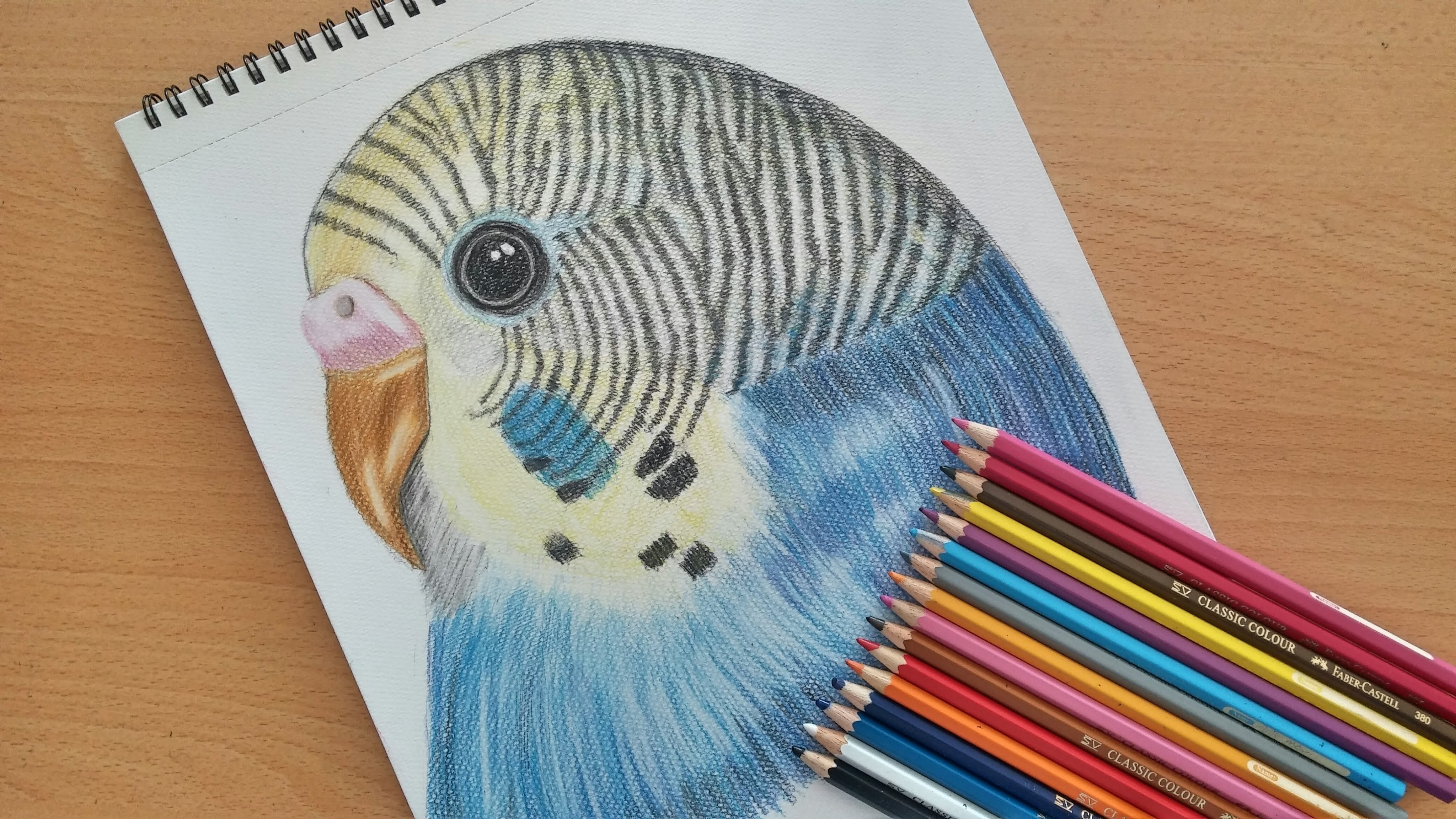 4096x2304 How To Draw A Budgie (Speed Drawing) Colored Drawing