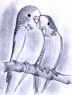 236x309 Parakeet Sketches! So Cute! Arts Parakeets