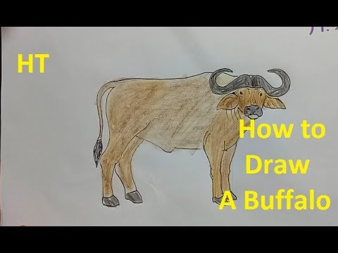 480x360 How To Draw A Buffalo Step By Step Easy!, Draw Cute Animals
