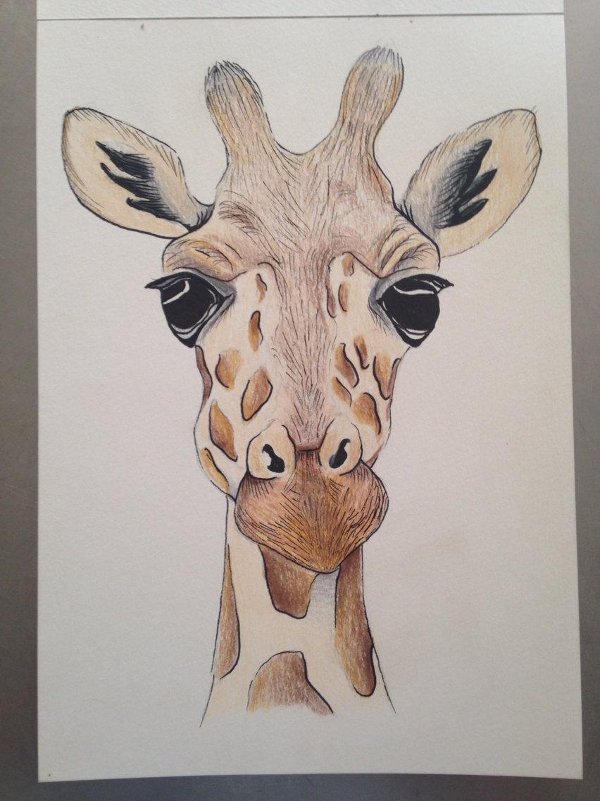 852x1136 A5 Giraffe Face Drawing Using Pencil And Ink. Original Piece