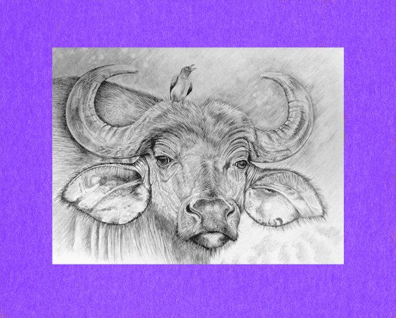 570x457 Aceo Atc Artist Trading Card Cape Buffalo By Roxy5235 On Etsy