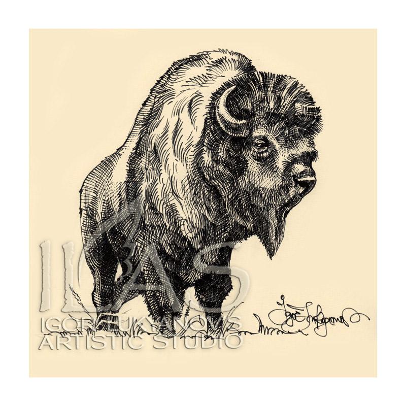 800x800 Bison Drawing For Buffalo Jackson Trading Co.