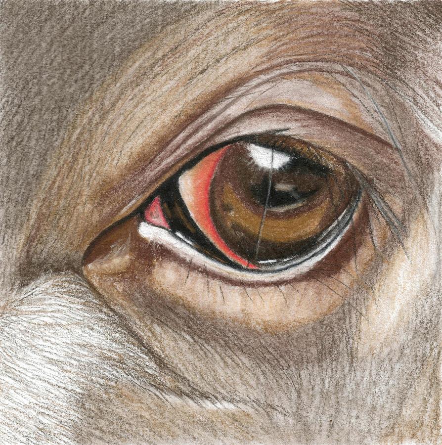 894x900 Buffalo Eye