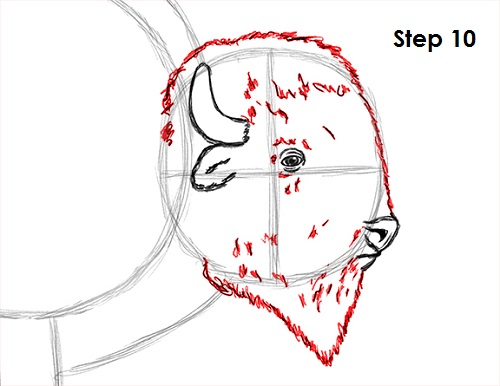 500x386 How To Draw A Bison