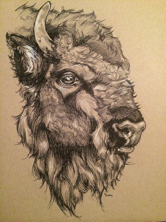 570x760 Image Result For Buffalo Head Drawing Art Buffalo