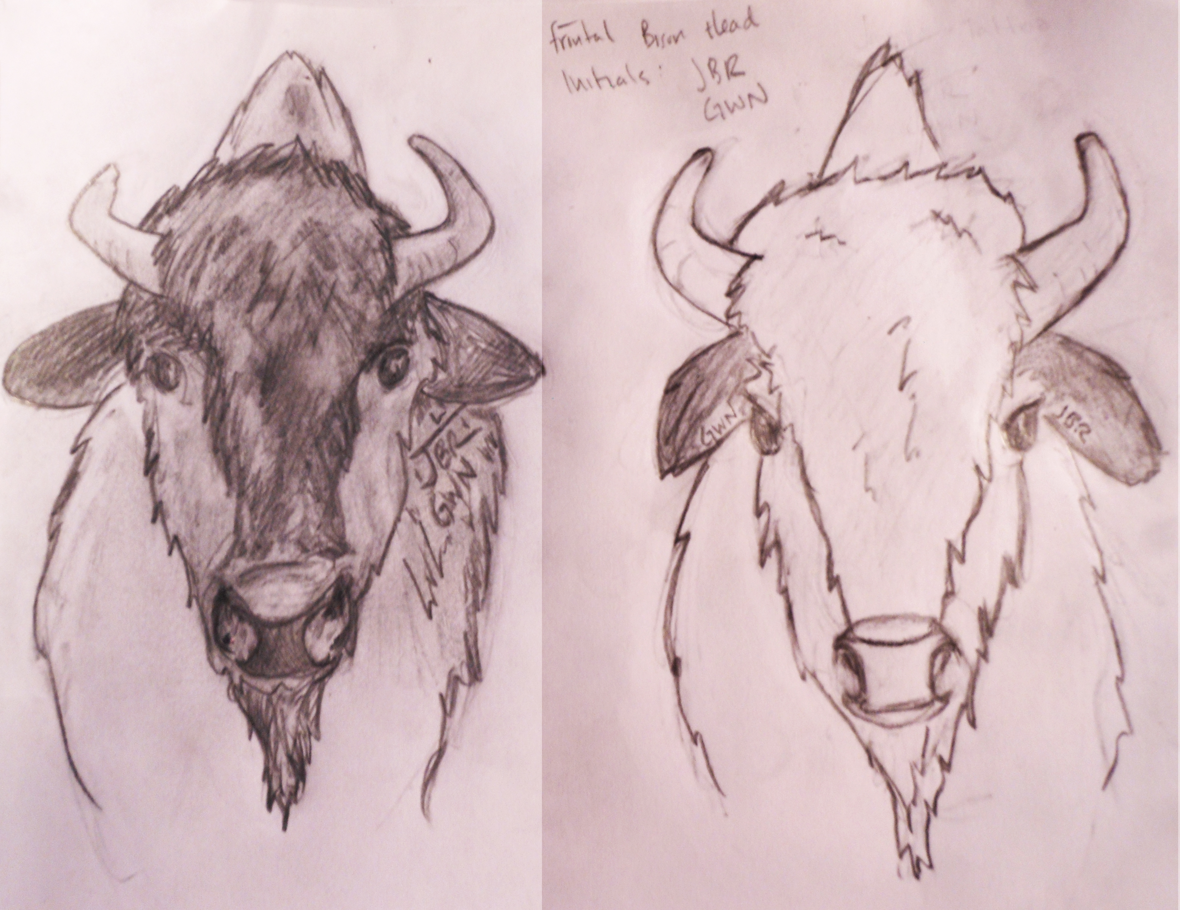 3906x3012 How To Draw A Bison Head