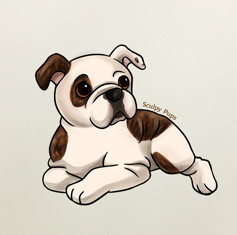 783x778 Bulldog Pup Drawing By Sculptedpups
