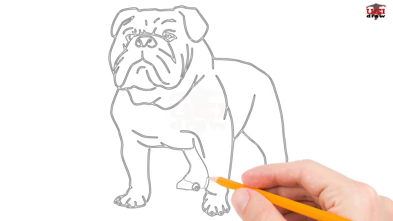 1280x720 How To Draw A Bulldog Step By Step Easy For Beginnerskids