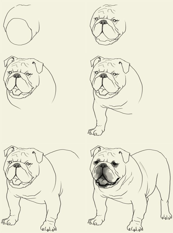 700x943 How To Draw Bulldog Elementary Art Drawings