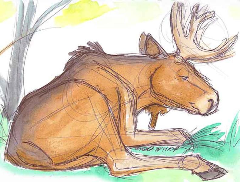 792x600 Bull Moose. Nature. Drawings. Pictures. Drawings Ideas For Kids