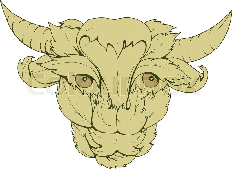 800x584 Drawing Sketch Style Illustration Of Green Cow Or Bull With Head