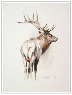 236x309 Beautiful Pencil Drawing Of A Bull Elk Deer Bull