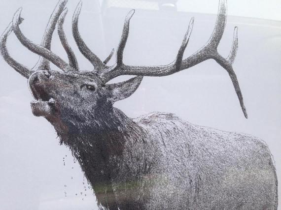 570x427 Bull Elk Bugling In River Original Pointillism Drawing Bull Elk