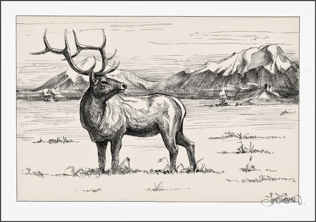1024x720 Elk Drawing