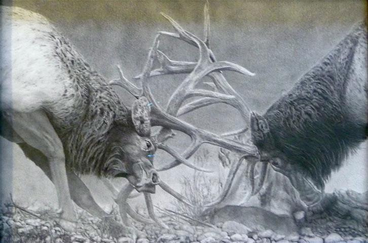 726x480 Fighting Bull Elk Oregon Prison Art