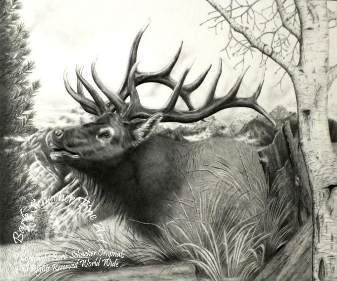 680x568 Majestic Bull Elk Pencil Drawing