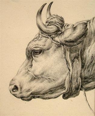 314x382 Central European 19th Century Pencil Drawing Of A Bull's Head