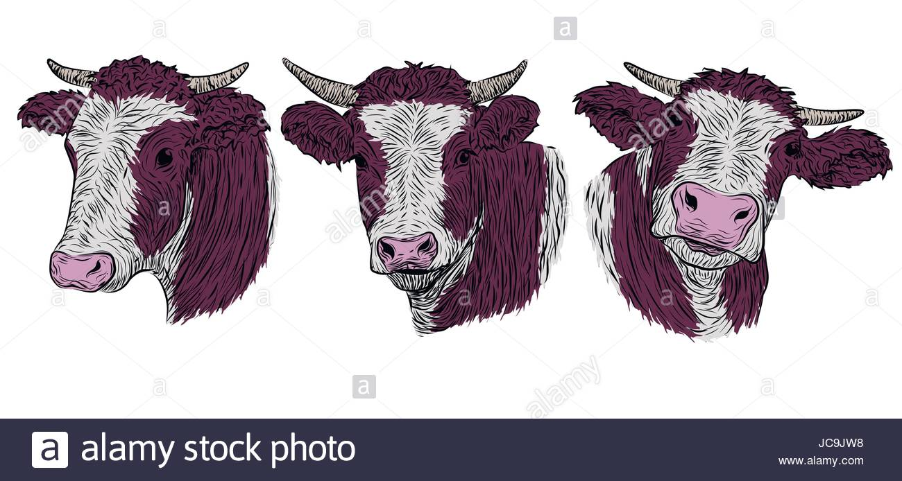 1300x694 Cow, Calf, Bull Cute Muzzle Face In Three Different Set Collection