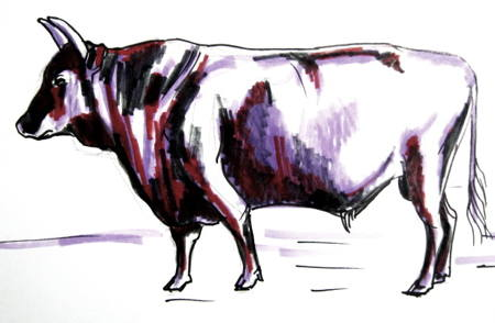 450x294 How To Draw A Bull