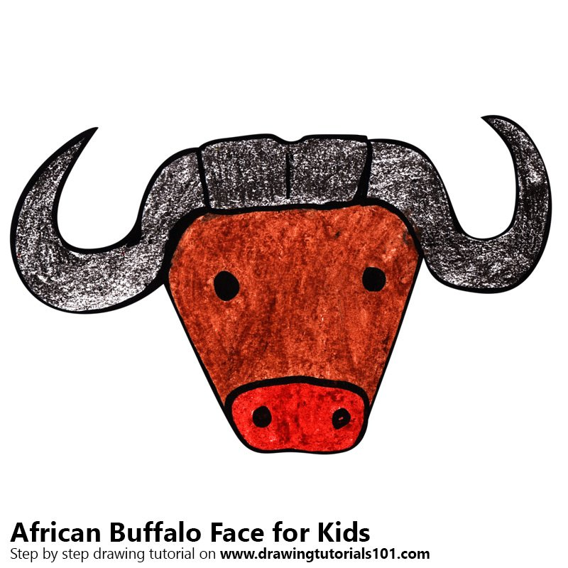 800x800 Learn How To Draw An African Buffalo Face For Kids (Animal Faces