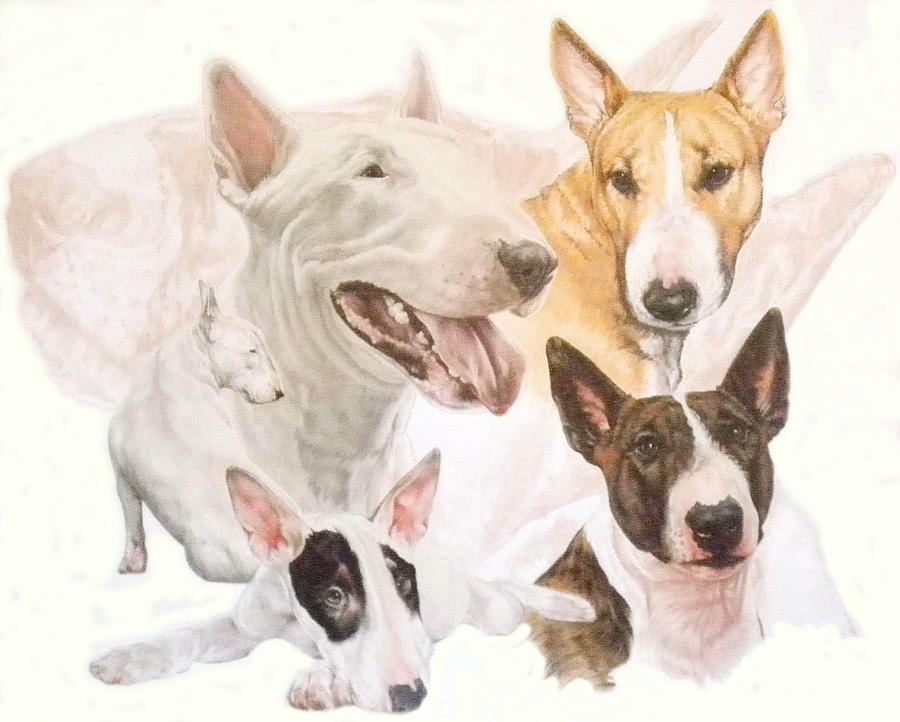 900x722 Bull Terrier Wghost Mixed Media By Barbara Keith
